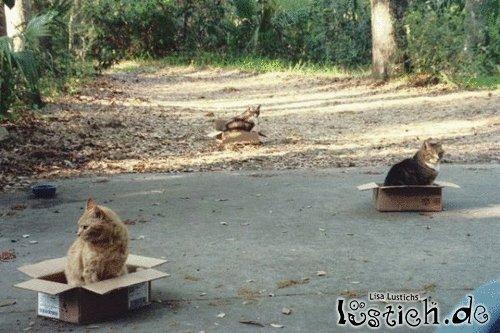 Katzenfänger