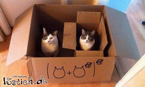 Katzenrechnung