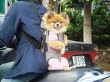 Hundetasche
