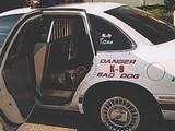 Böser Polizeihund