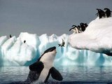 Wal frisst Pinguine