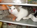 Katze im Kühlschrank