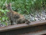 Katze auf dem Gleis