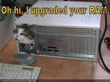 Katze mit Computerkenntnissen