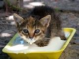 Babykätzchen mit Milchbart