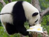 Panda Geburtstag