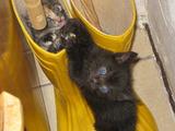 Katzenstiefel