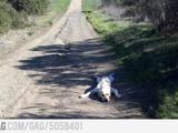 Mit dem Hund Gassi gehen