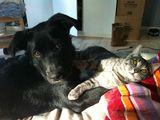 Meine Haustiere