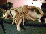Angriff auf die Katze