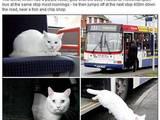 Buskatze