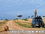 Wo sind die Löwen?