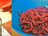 Gummiwürmer
