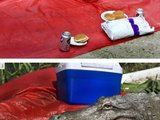 Unerwarteter Picknick-Besuch