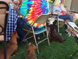 Hunde heimlich füttern