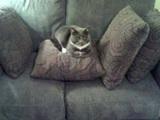 Das Sofa ist voll
