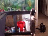 Ich will einen Fisch