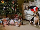 Hunde lieben Weihnachten
