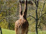 Zweiköpfige Giraffe