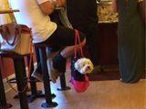 Hund oder Handtasche?