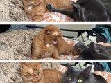 Katzenschreck