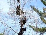 Baumbären
