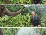 Elefant vs. Mensch