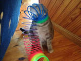 Katzes neues Spielzeug