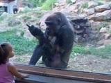 Netter Gorilla