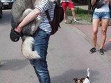 Ein fieser Hund