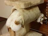 Perfekter Katzenhalter