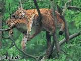 Kuscheln auf dem Baum