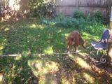 Akrobatischer Hund