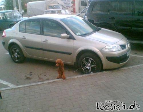 Hund an der Felge