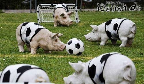 Fußball-Schweinerei