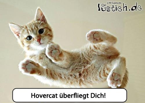 Hovercat im Training