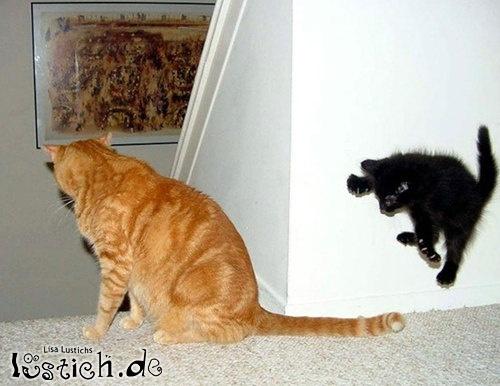 Springende Katze