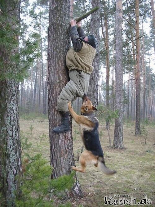 Hund jagt Jäger