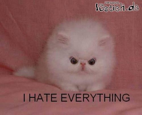 Ich hasse alles!