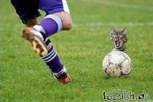 Katze beim Fußball