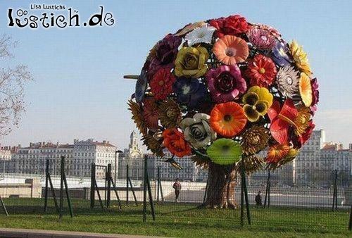 Baum-Blume