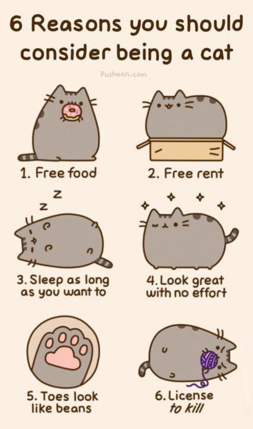 6 Gründe eine Katze zu sein