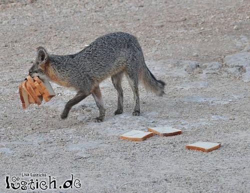 Brot ist gesund