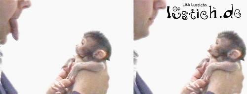 Dreister Affe