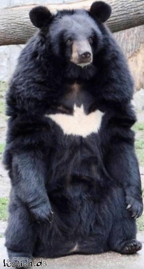 Batmans Bär