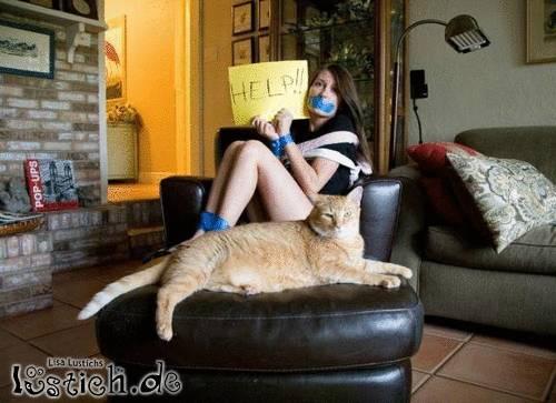 Katzenentführer