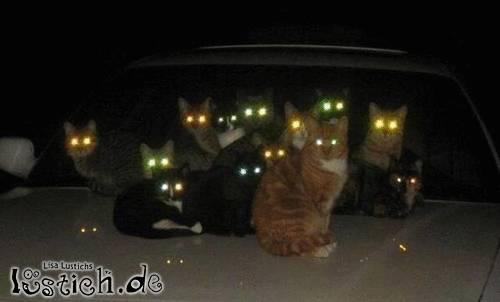 Die böse Gang