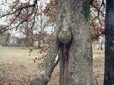 Anders gewachsener Baum