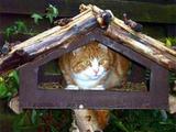 Hungrige Katze