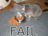 Arme hungrige Katze